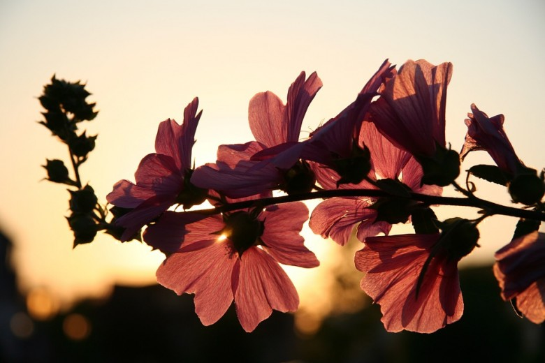 flower-646127_960_720